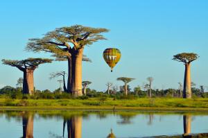Author: Christian Biosca. Avenue of Baobabs, Madagascar